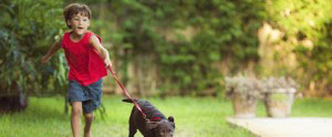 Pet friendly apartments in harrisonburg
