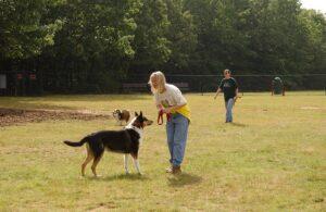 Basic Dog Park Manners