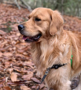 Dog walking trails in Chester