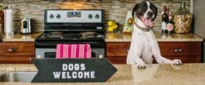 Pet-Friendly Apartments in Chester Va