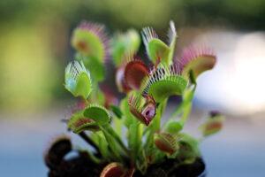 Pet Friendly Apartment House Plants